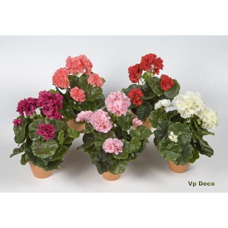 Geraniums in pot