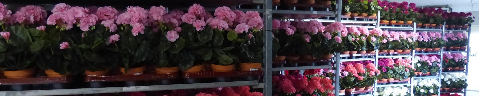 Mini-Plants